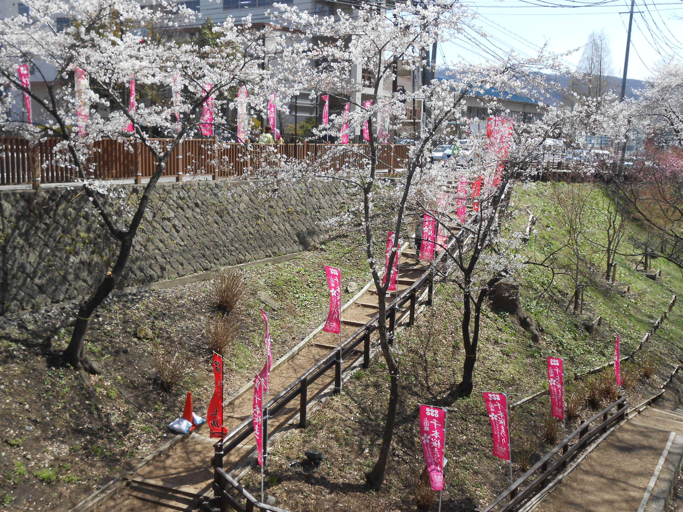 Ueda 1,000 Cherry Blossoms Festival
