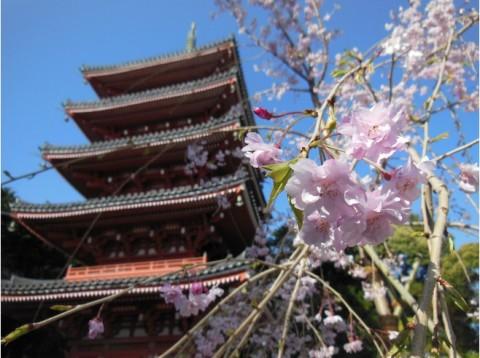 6969391-Chikurinji_Temple-Kochi