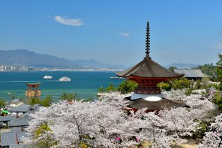 photo of Charms of Southern Japan Cherry Blossom Special