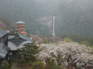 photo of The Pilgrimage Route of Japan Cherry Blossom Special Tour