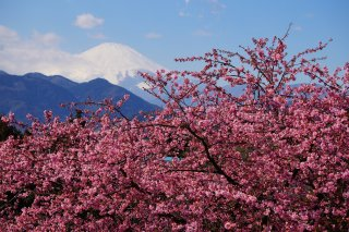 The Golden Triangle of Japan Winter: Kawazu 