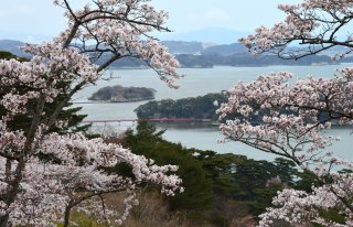 photo of Highlights of Hokkaido & Tohoku Cherry Blossom Special Tour
