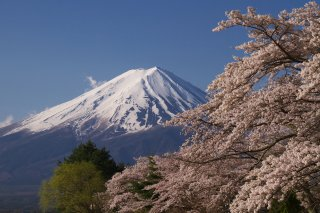 photo of Japan In Depth Cherry Blossom Special