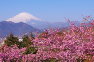 Best of Japan Tour Winter with Japanese Alps: Kawazu 