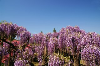 Japan In Depth with Japanese Alps (Reverse): Great 