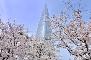 photo of Highlights of Korea and Japan Cherry Blossom Special