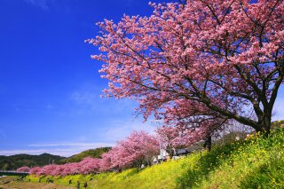 The Golden Route Japan Tour Winter (Reverse): 