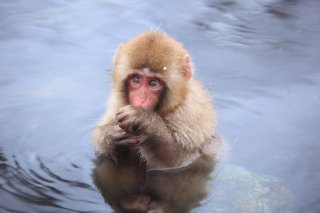 The Golden Triangle of Japan Tour Winter: Snow 