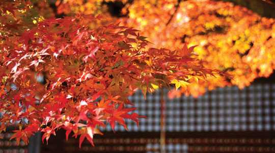 Autumn Leaves Guide read more